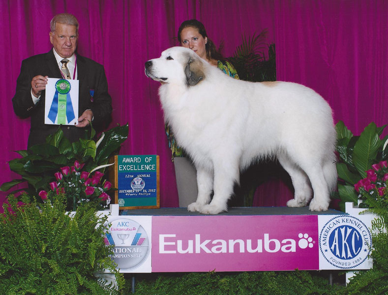 Titan winning an Award of Merit at Eukanuba
